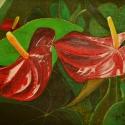 My Anthurium Lilies