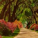 Bougainvillea Roadway