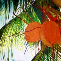 Coconut Three